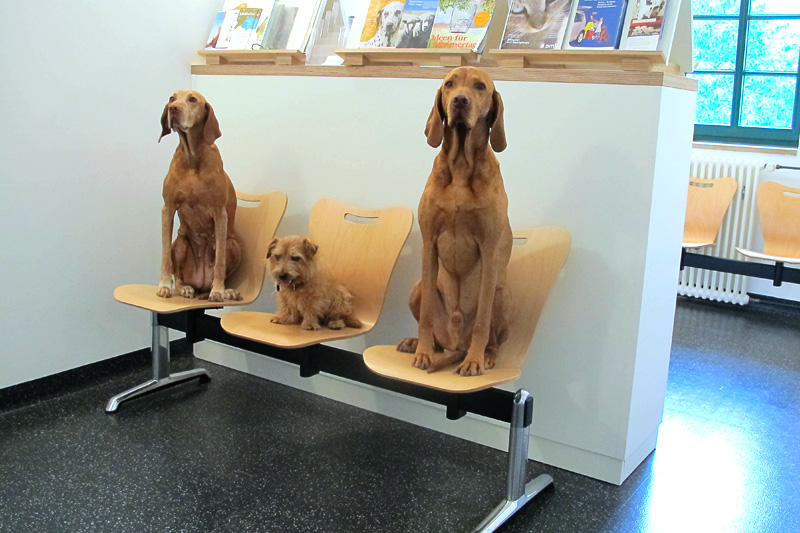 Wartezimmer_Hunde